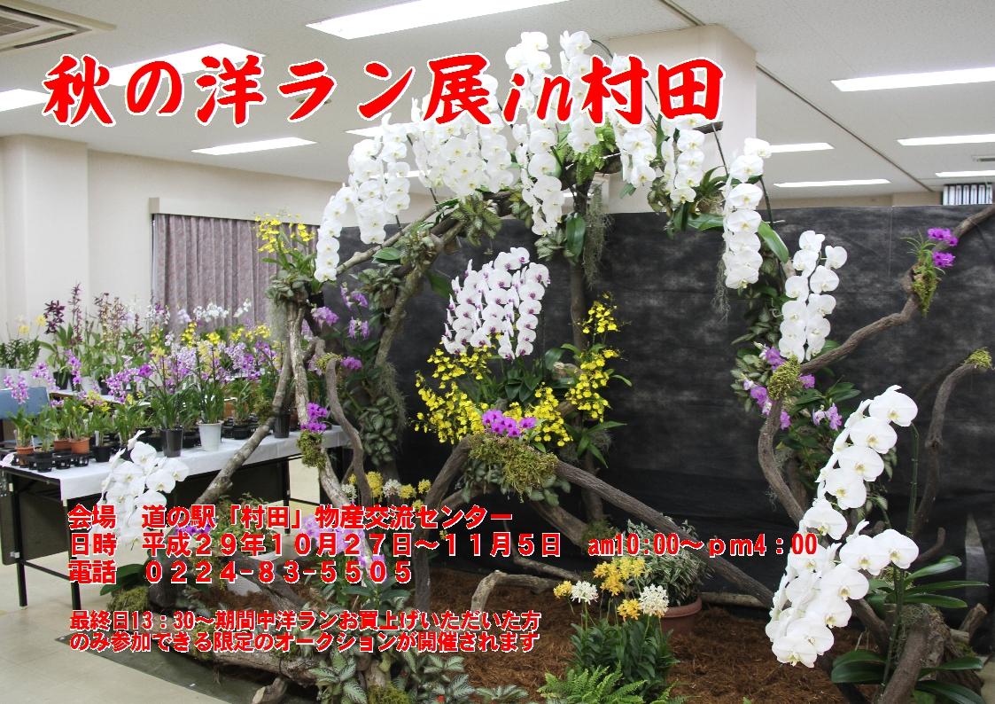 秋の大洋蘭展