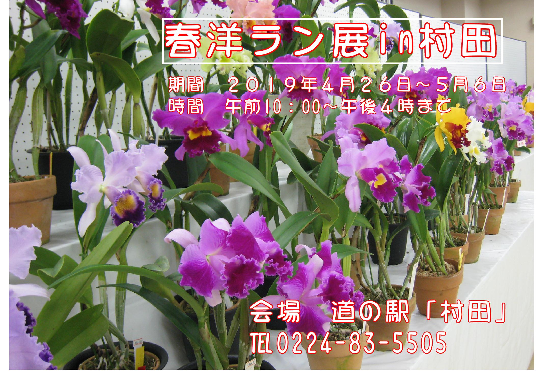 春洋ラン展in村田