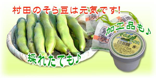 村田のそら豆は元気です!